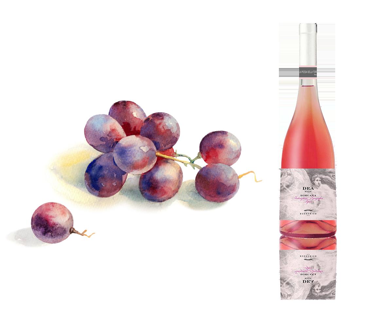 Vini Rosè